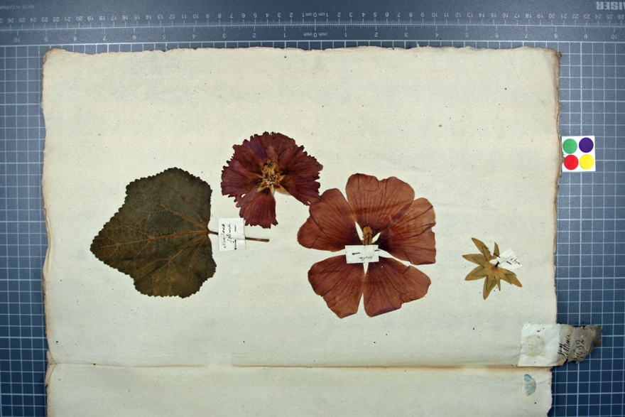 © Musée Borda